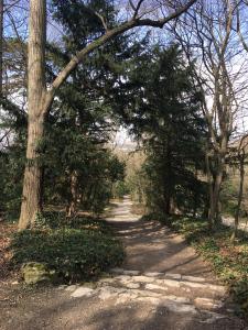 schonbrunn-palace-garden-walk.jpg