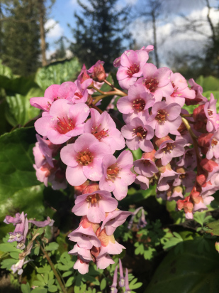 berlin-botanical-gardens-pink-flowers.jpg