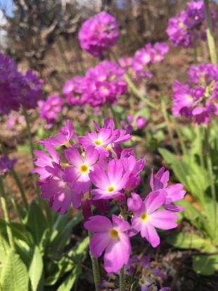 berlin-botanical-gardens-purple-flowers-close-up (1).jpg