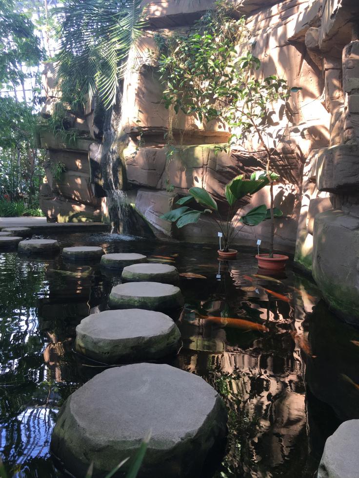 berlin-botanical-gardens-coy-fish-pond-1.jpg