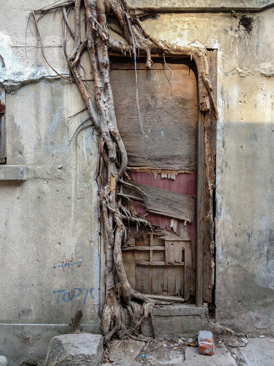tree-roots-concrete-pavement-9 copy.jpg