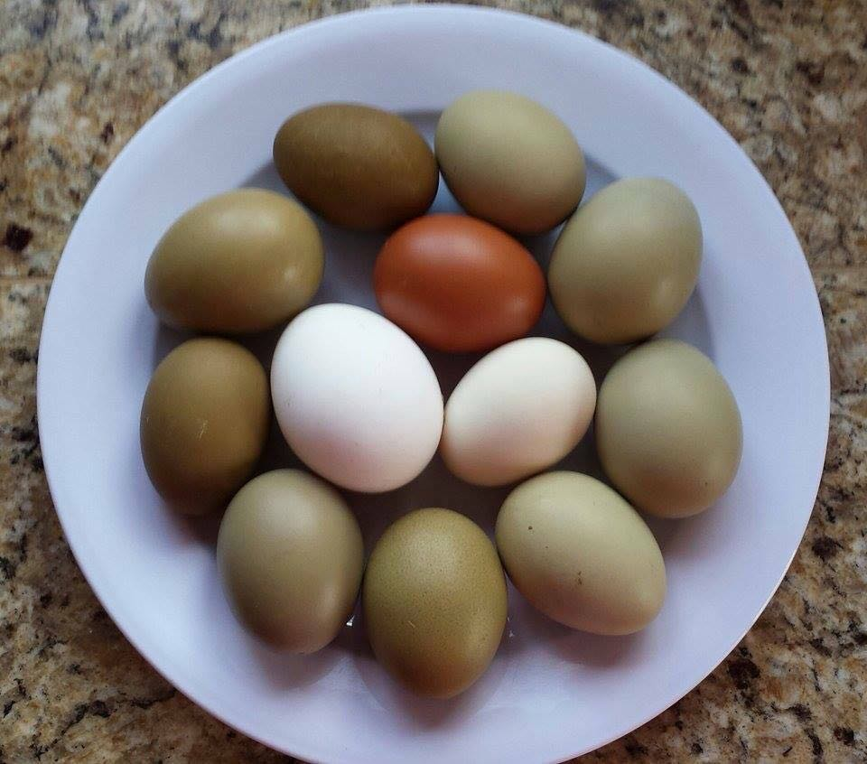 Fresh Eggs.jpg