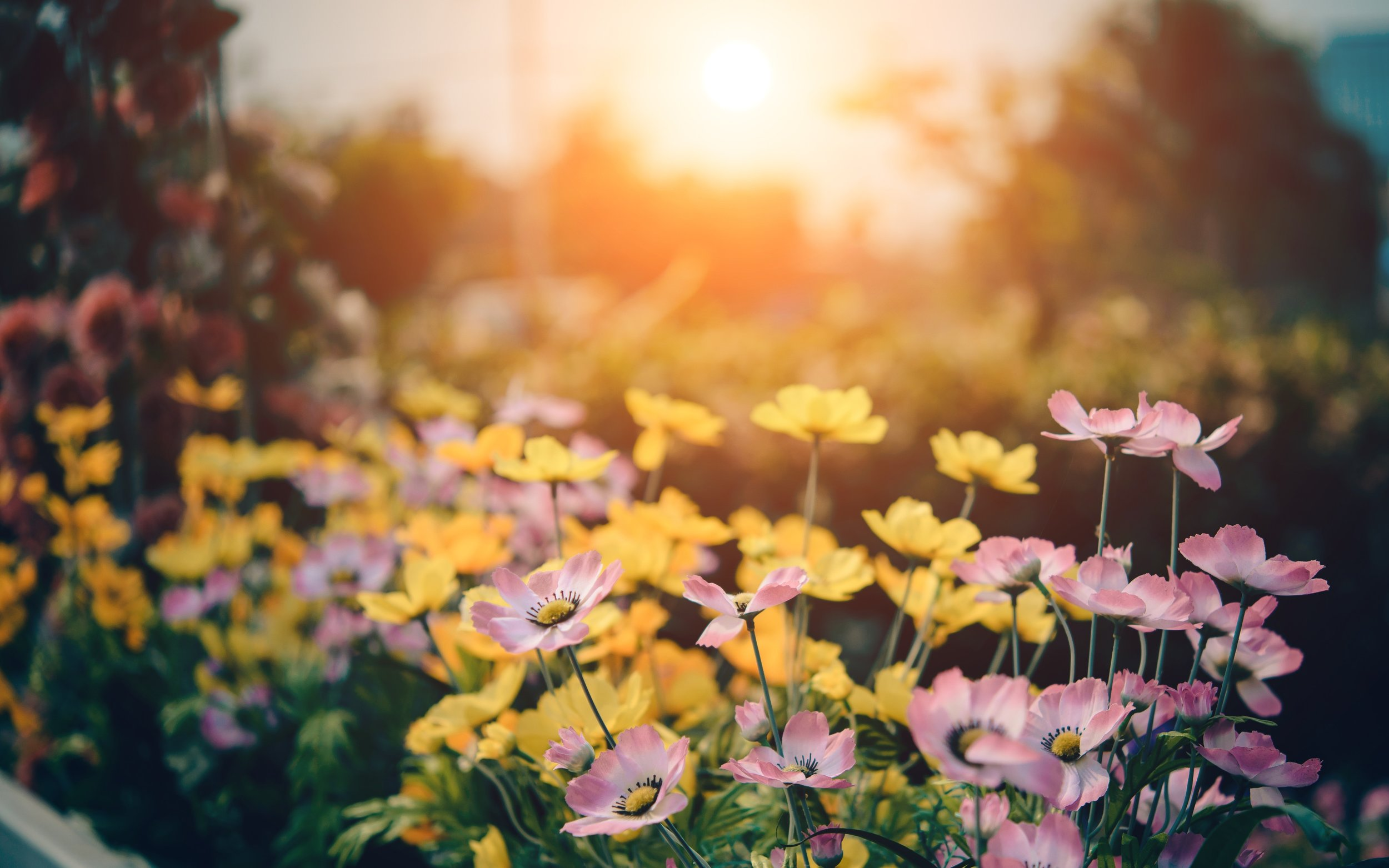 bloom-blossom-flora-158636.jpg