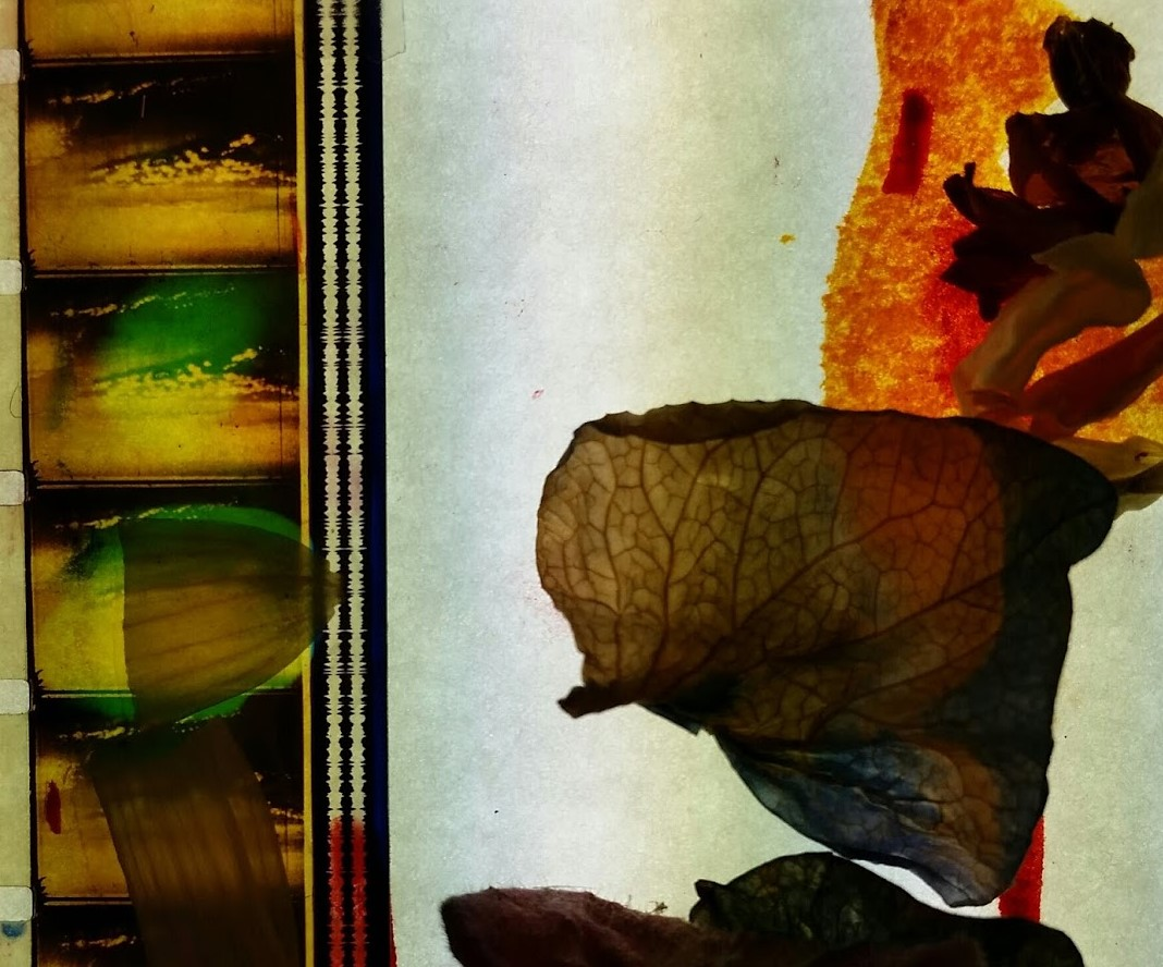 Film Strip with Flowers after Rauschenberg.jpg