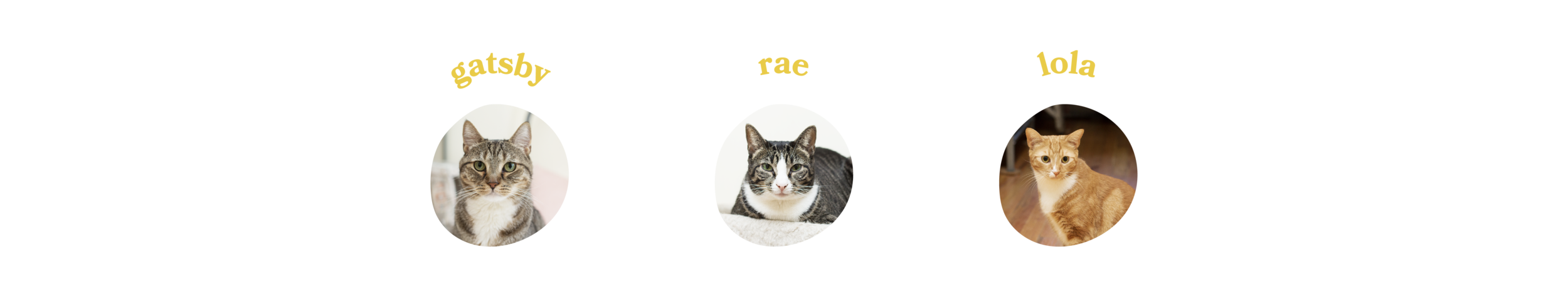 cats-11.png