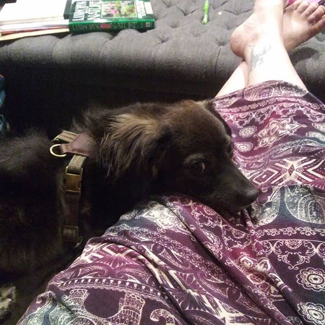 We have a new family member! Since she's sweet, charming, scruffy and clearly has at least two fathers... We've named her Deet. #ageofresistance  #dogsofinstagram  #dachsoodlehuahuatever
