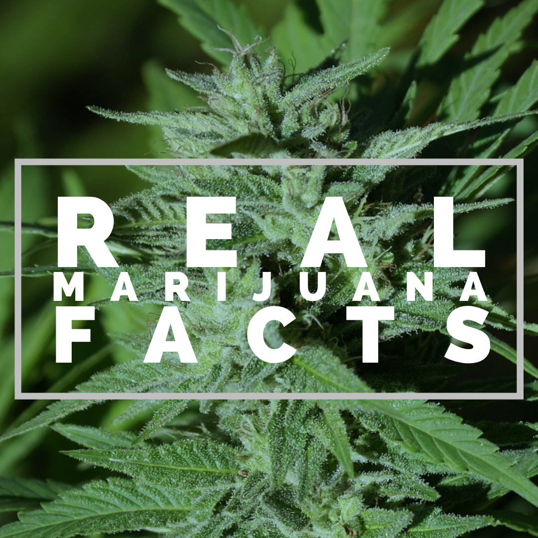 facts the marijuana industry won't talk about -