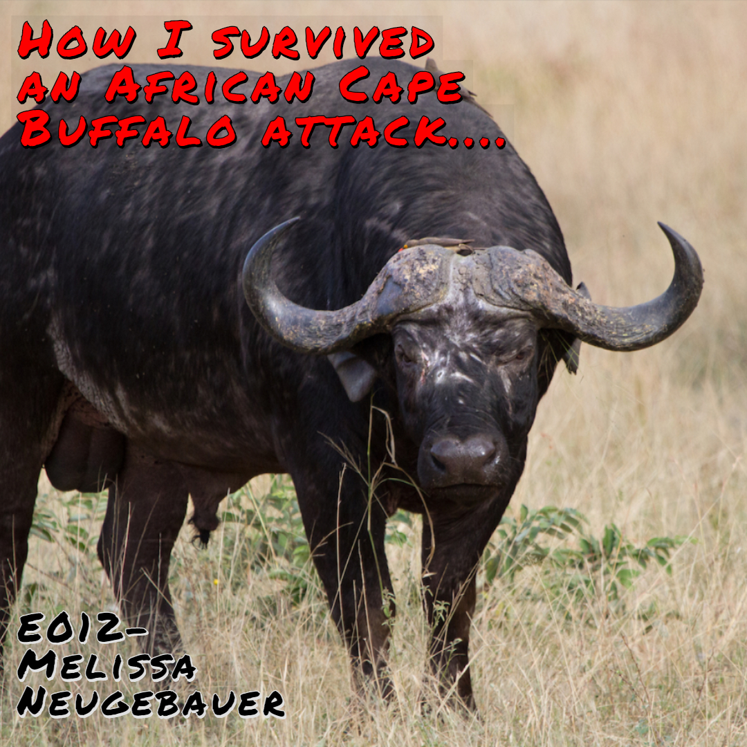 Surviving A Cape Buffalo Attack! - with Melissa Neugebauer