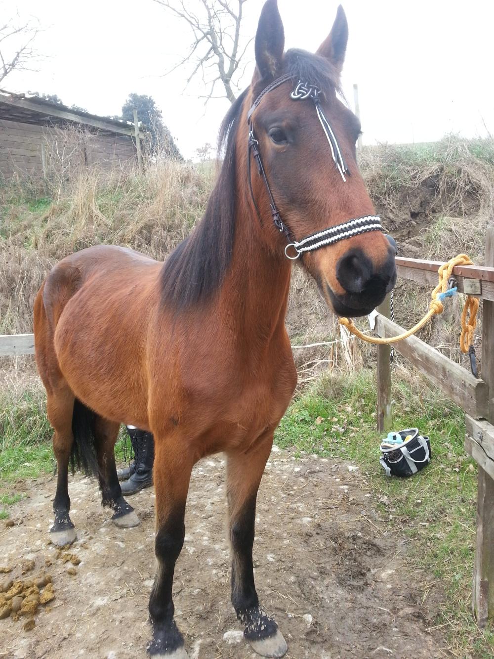 horse Ambaé.jpg