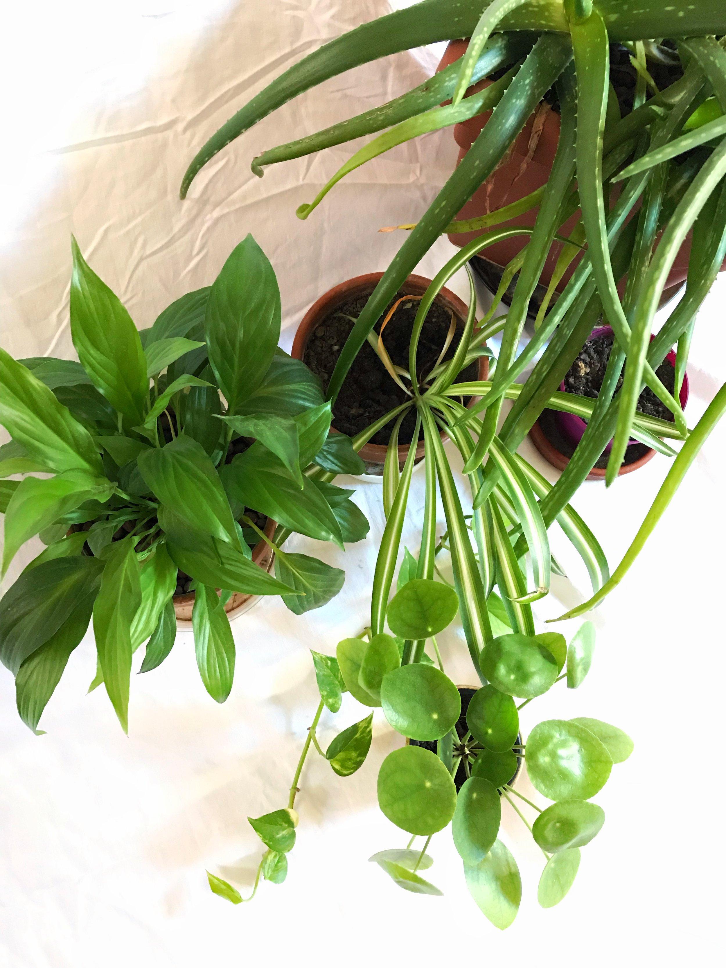 Plant babies.jpeg