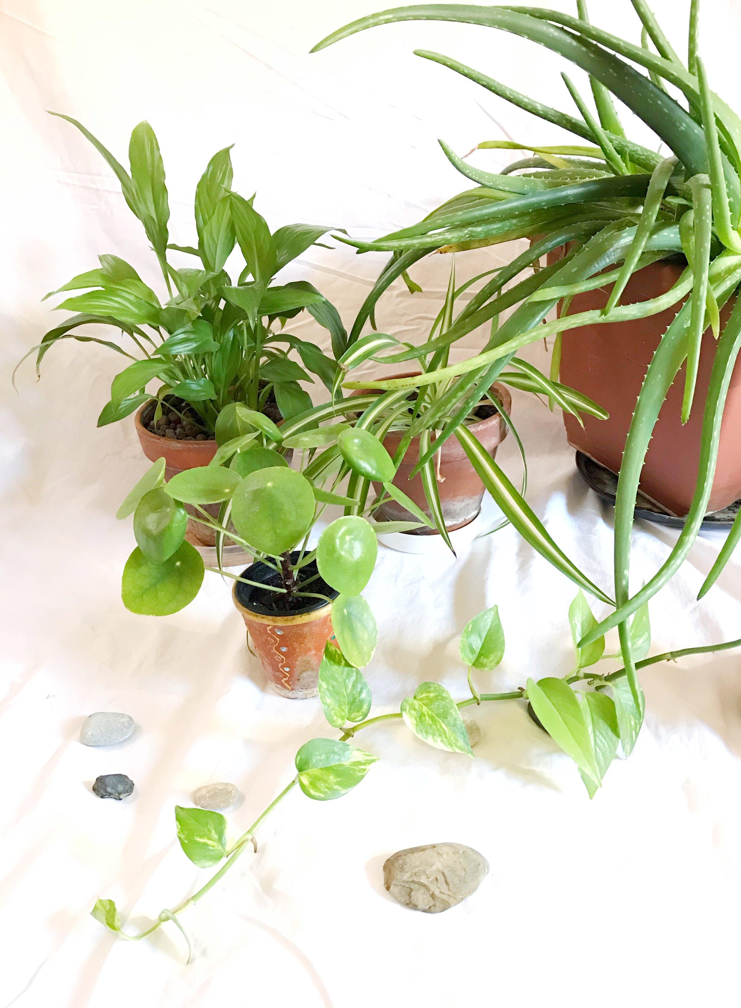 houseplants.jpeg