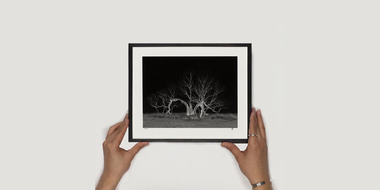 Copy of Sophy Rickett – Lightning Tree