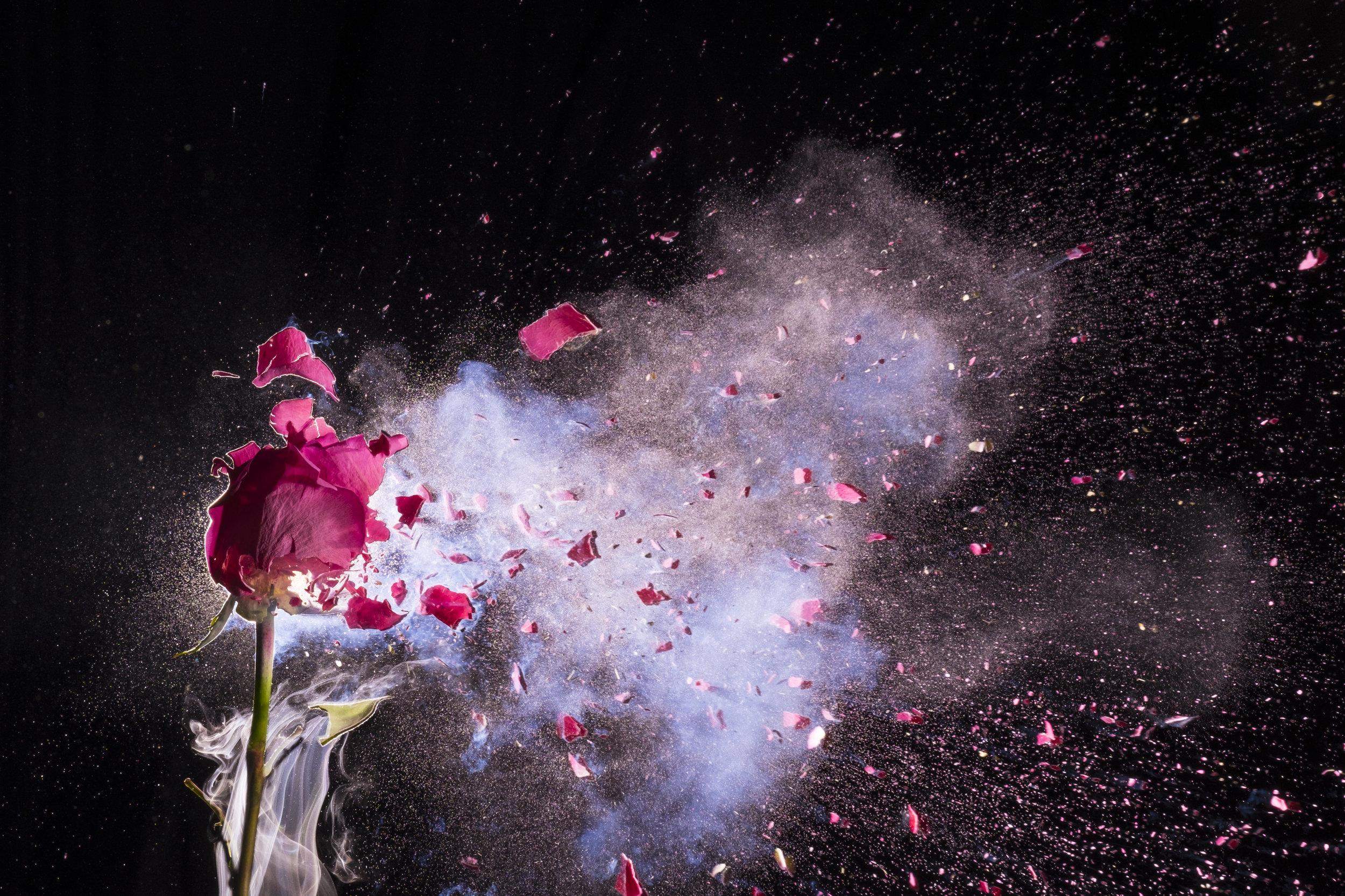 single pinkplode.jpg