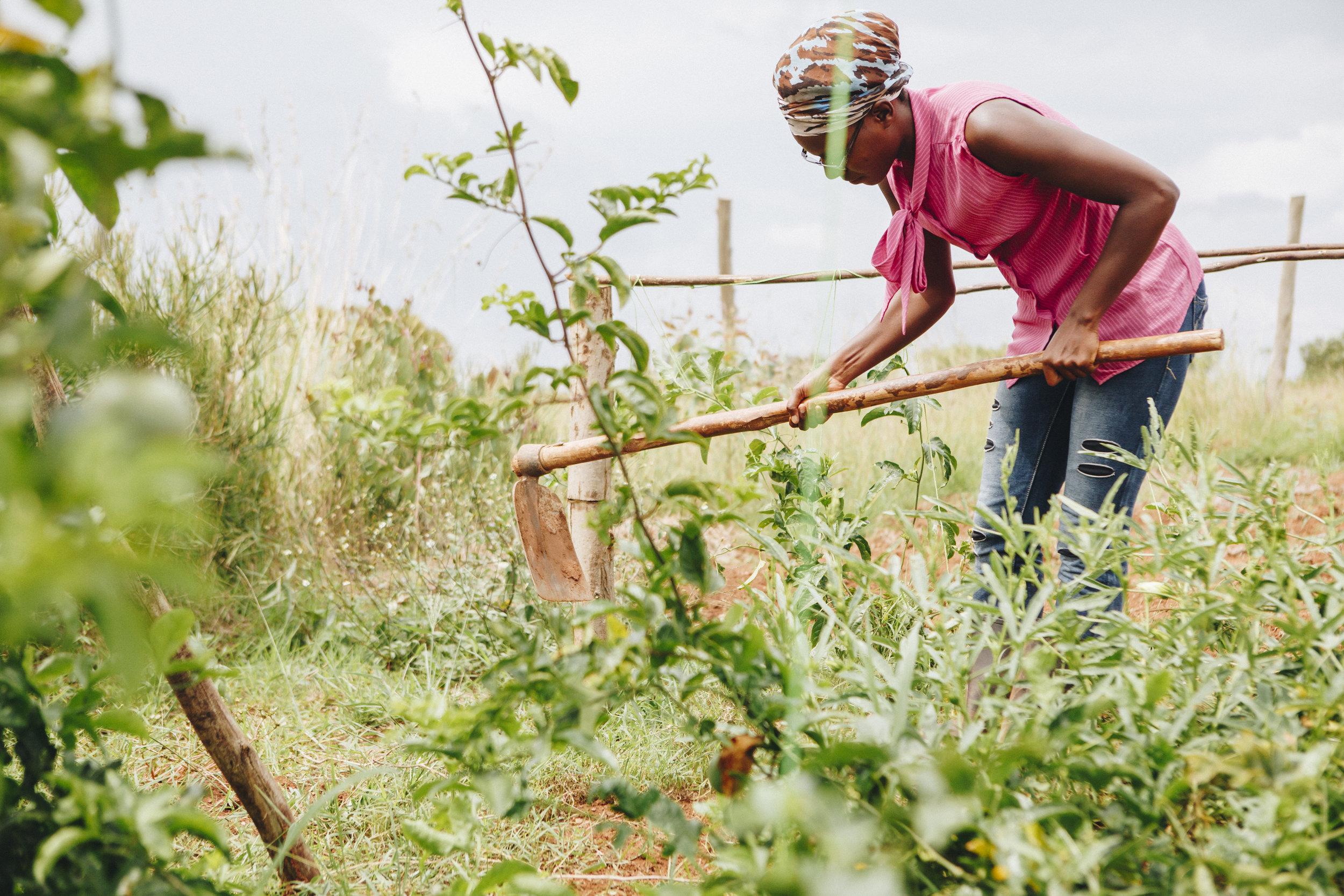 Uganda Female Farming