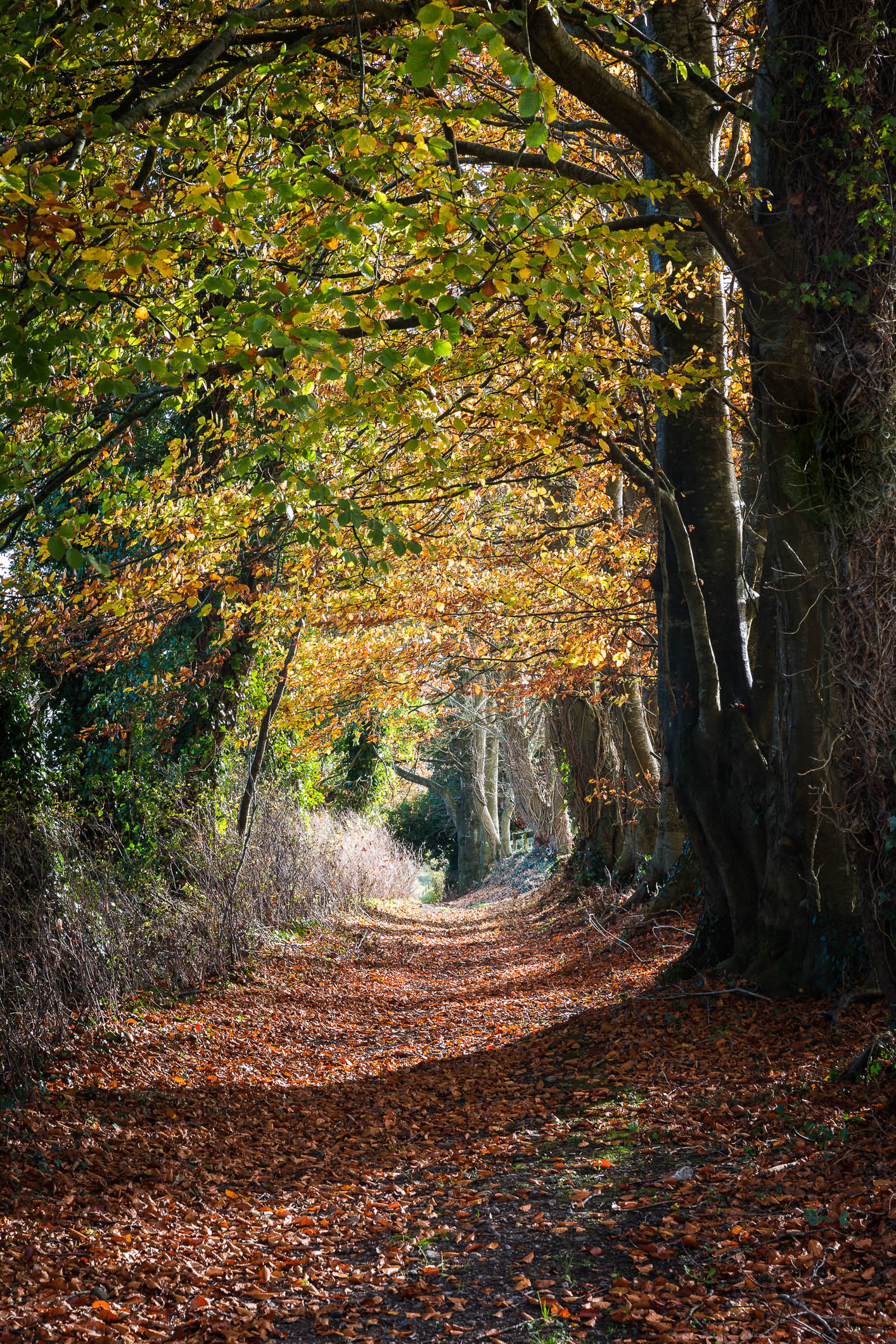 Autumn Pathway (1 of 1).jpg