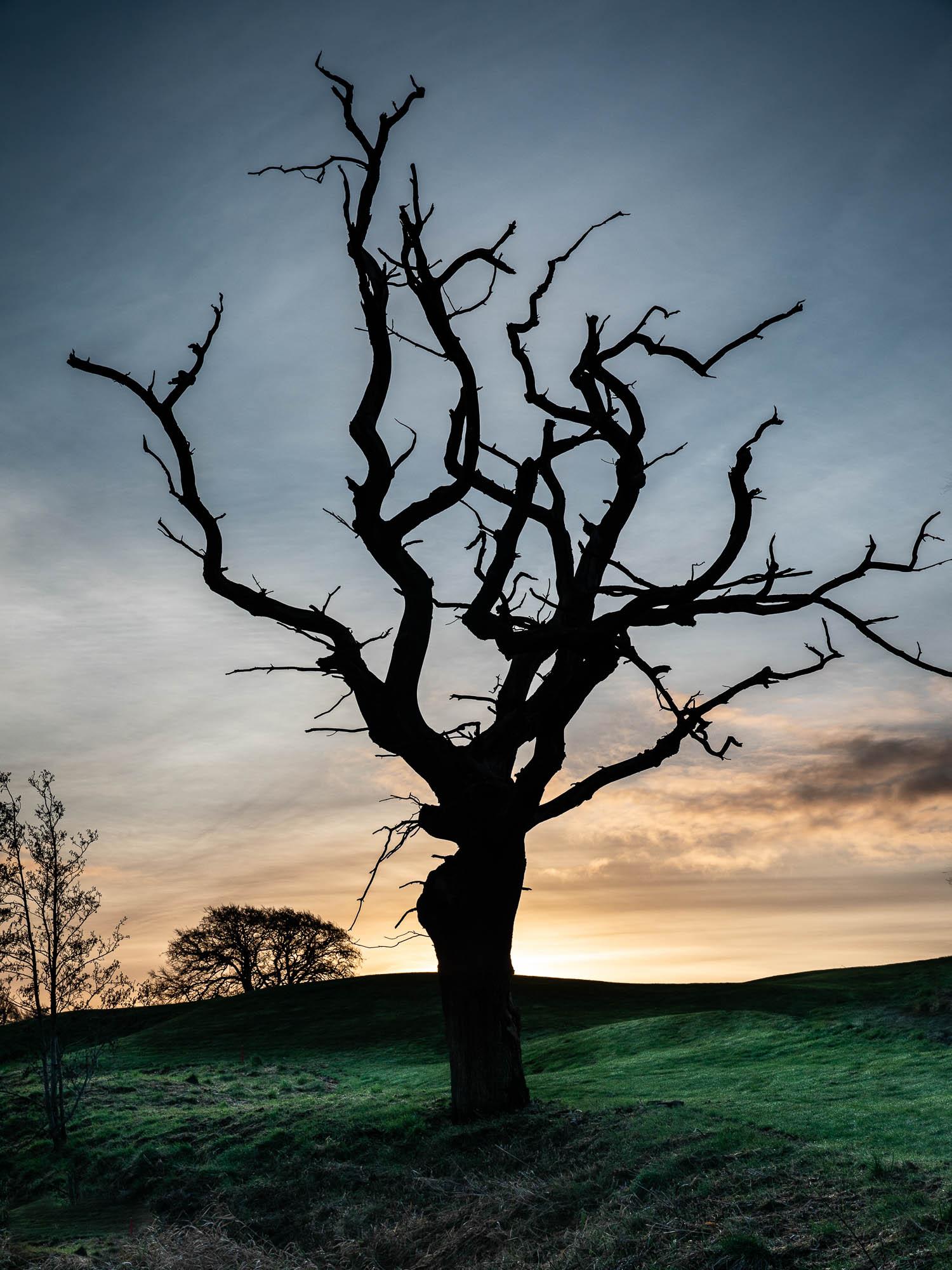 Glowing Tree Sharp-3105.jpg