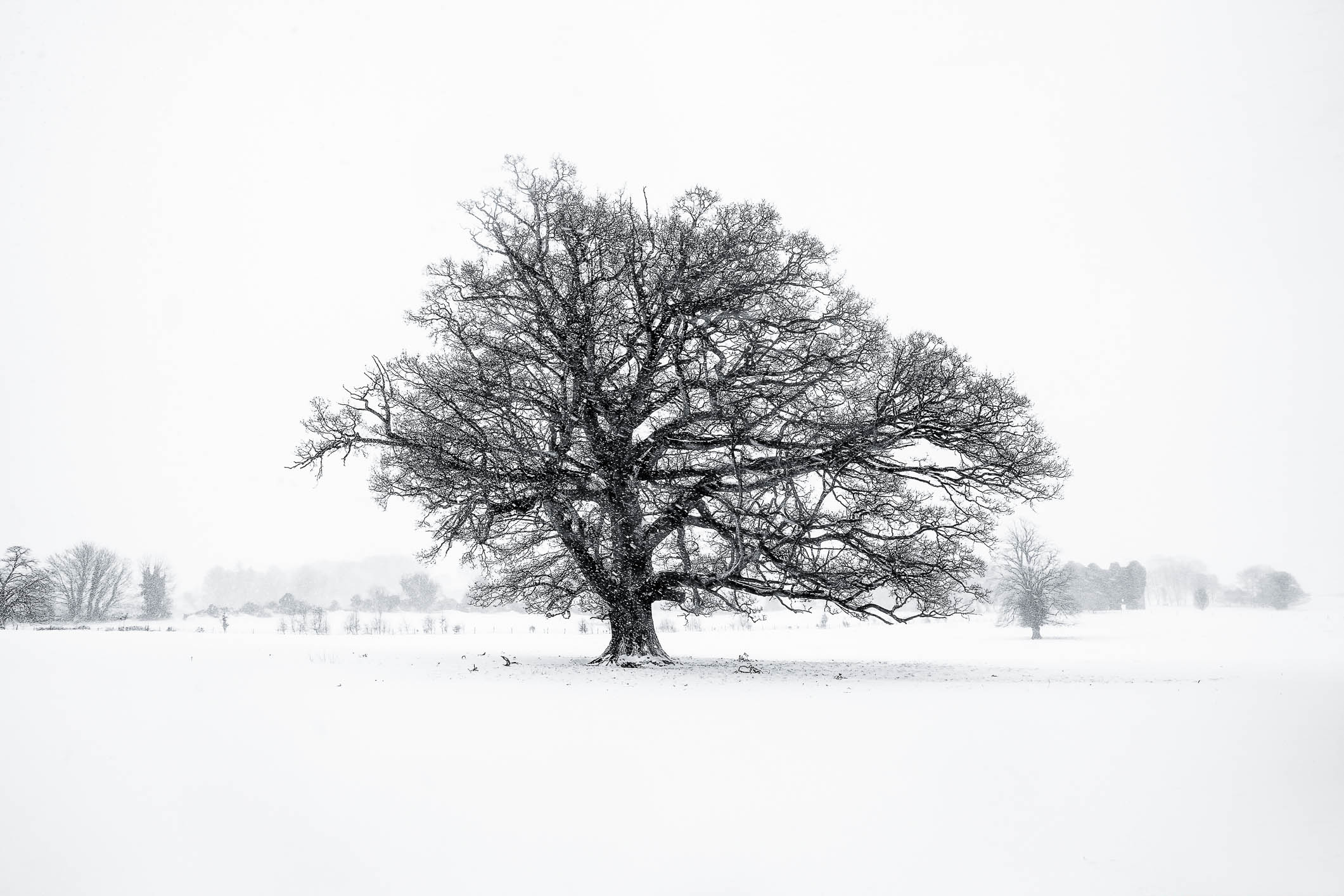 The Giant Tree in Snow.jpg