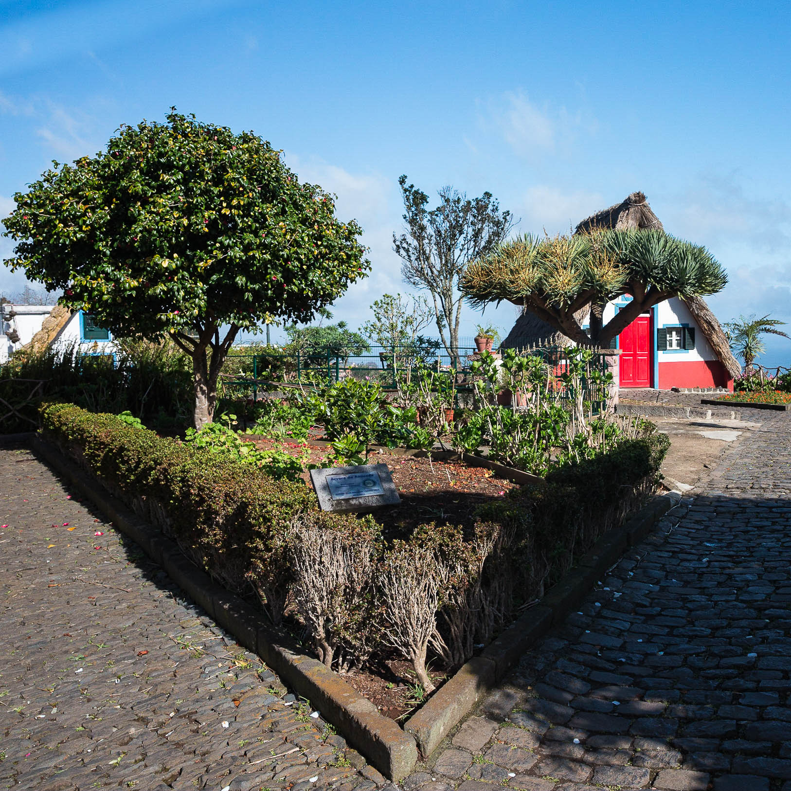 Madeira-6831.jpg
