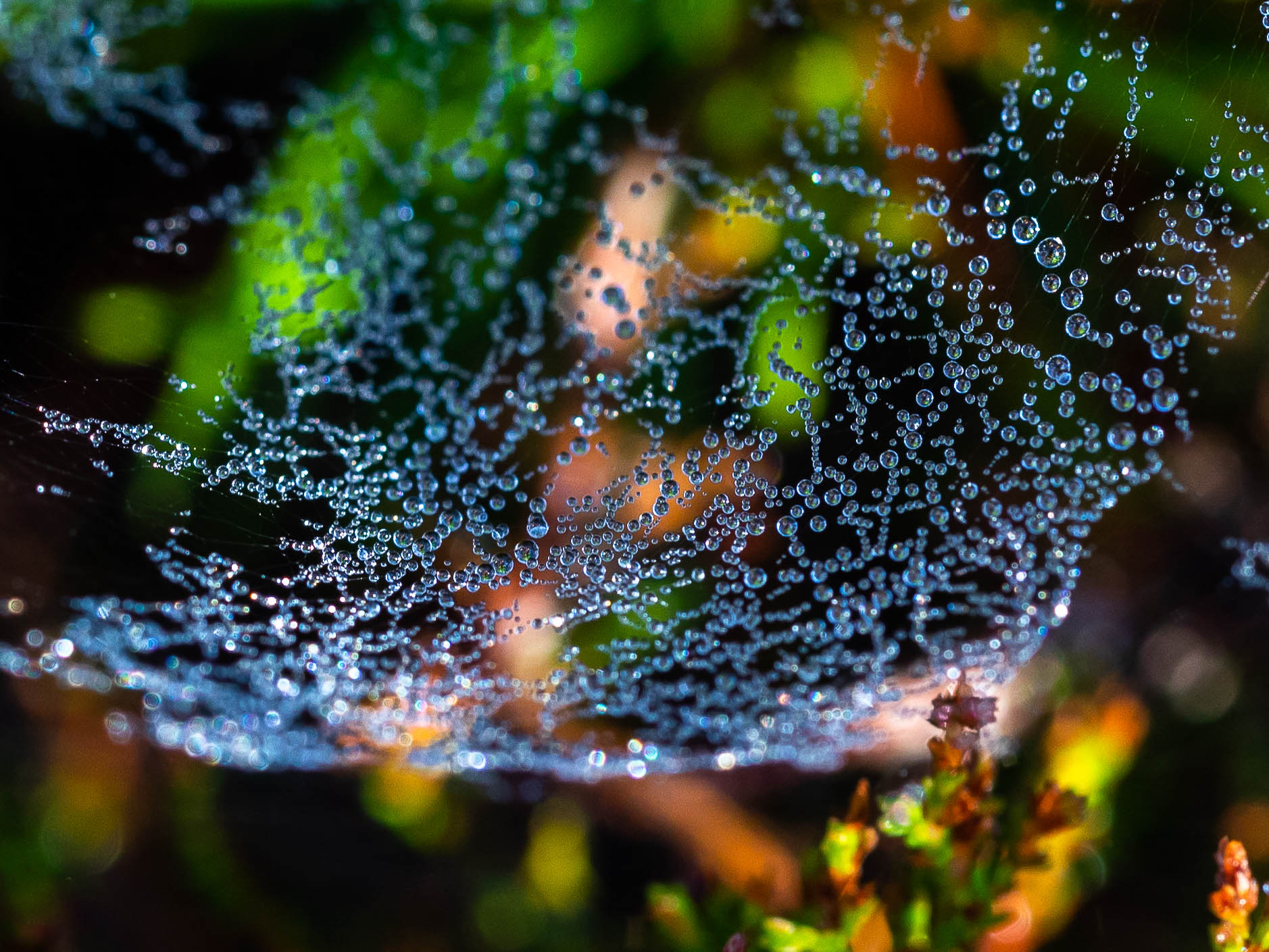 Web droplets-1389.jpg