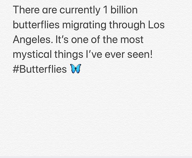 All over the city we are having butterflies flying everywhere. There are some many you can't count them.  Make a wish and post s butterflies in the comments below! #butterfliesinlosangeles #butterflymigration #losangeles