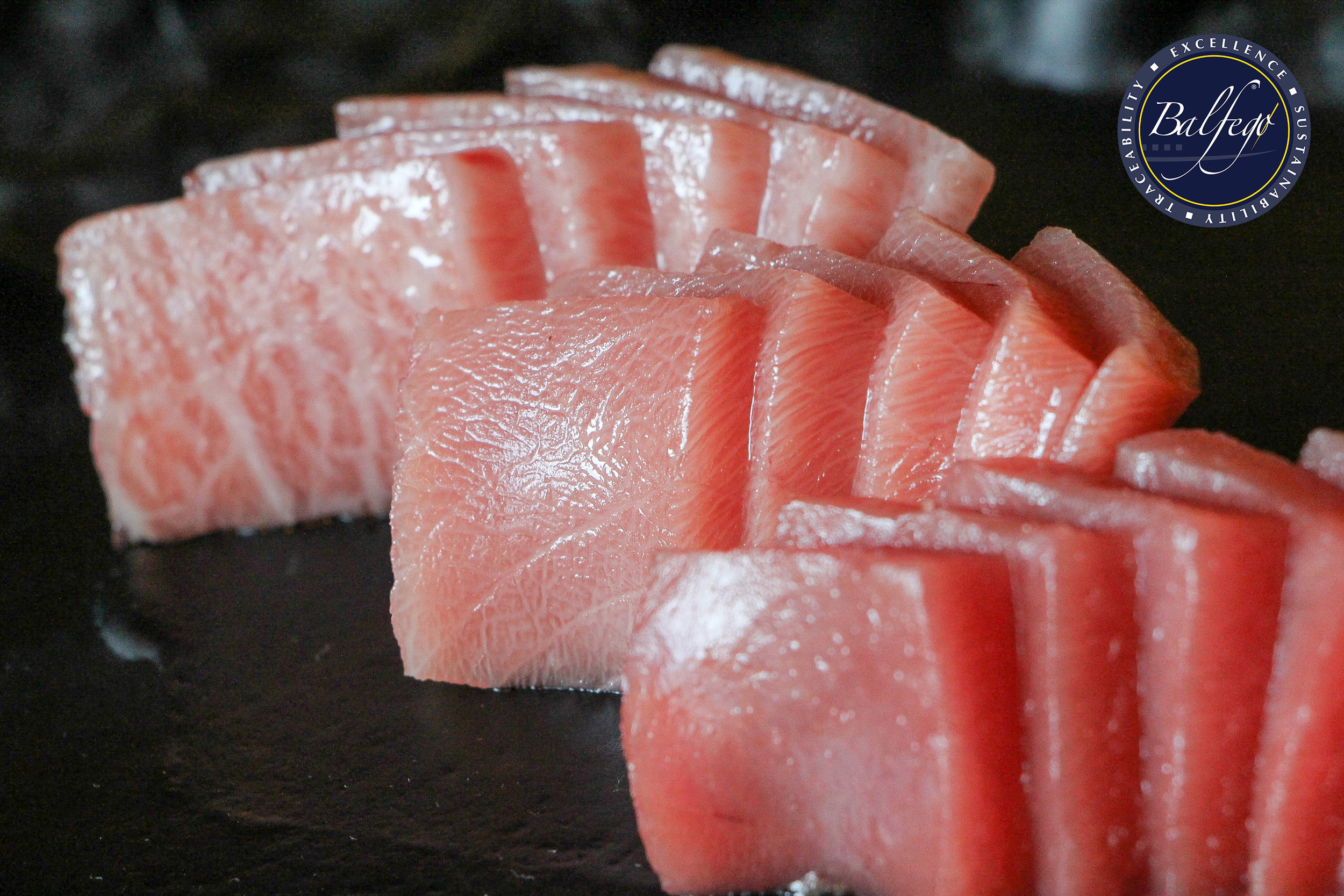 sashimi horitzontallogo.jpg