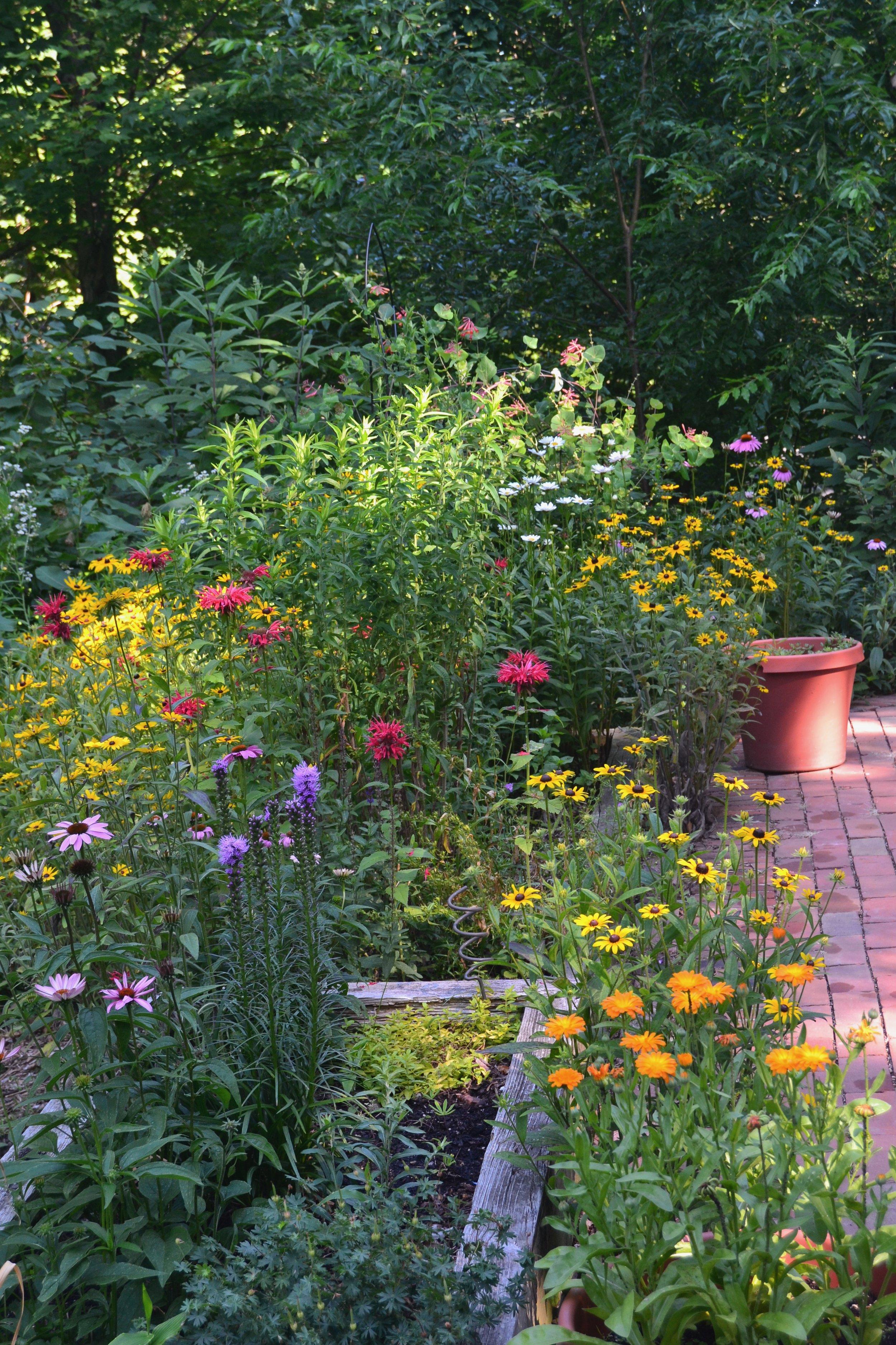 Perennial Border - A mixed border of native and ornamental perennials attracts pollinators and birds and provides all season interest.