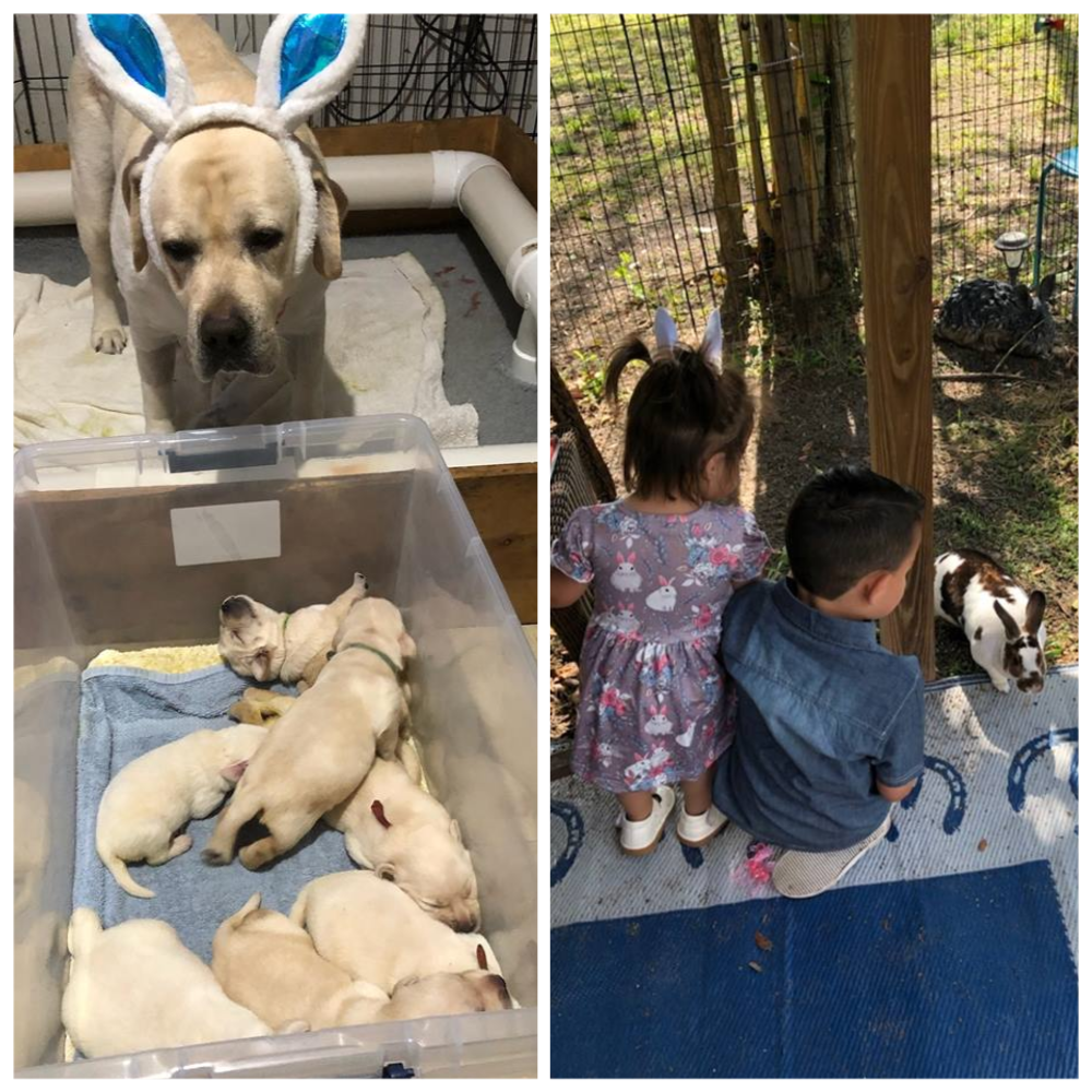 April 21, 2019 -  We here at Hope Therapy hope everyone had a lovely Easter! We most certainly did 😊
