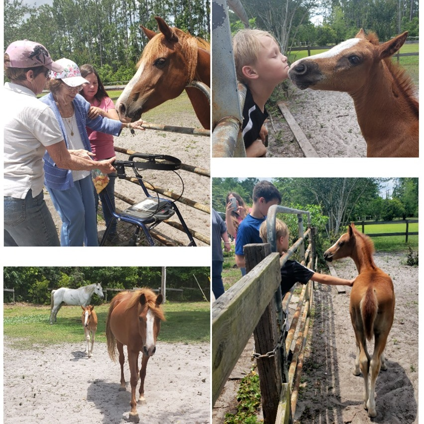 May 13, 2019 -  We hope that everyone had a wonderful Mother's day! Our co-founders, Marianne and her daughter, Becky, as well as Marianne's mother and Becky's children, came to visit Hermione and her filly, Penelope, and it made for some very cute multigenerational pictures!