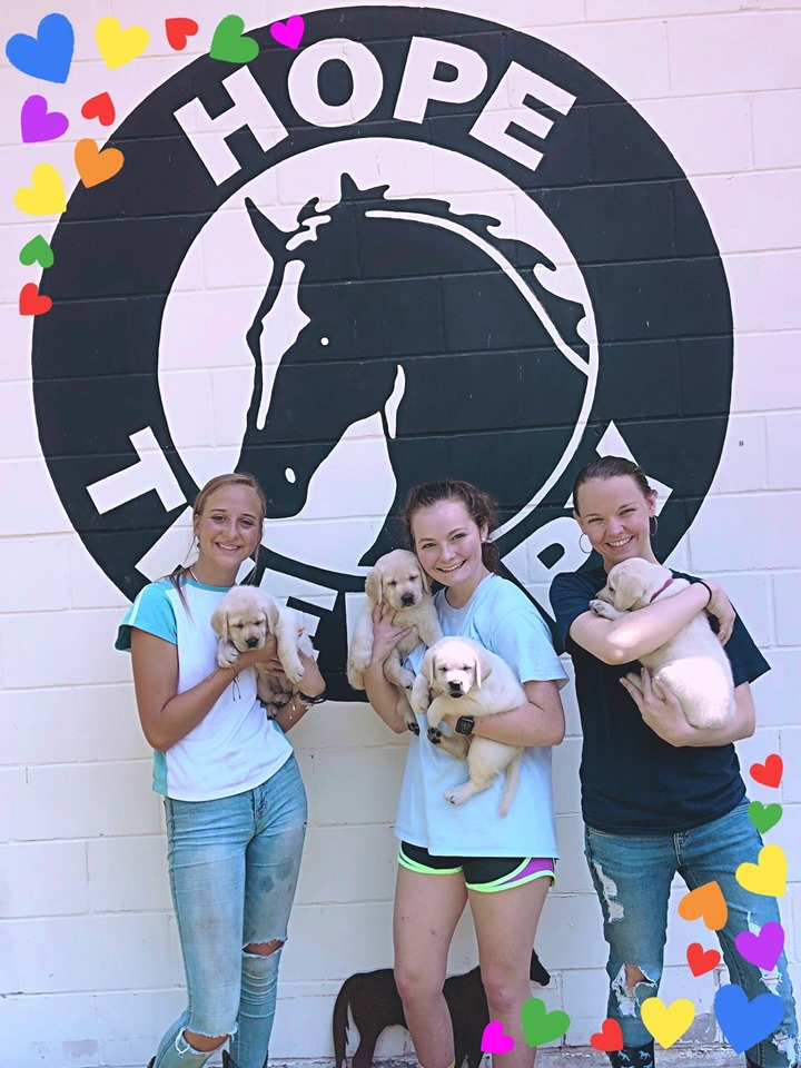 27 May, 2019 -  Puppies puppies puppies! Yellow labrador retrievers, they are so cute and sweet it will melt your heart! We still have some available!! Thank you to our volunteers Klare, Abbie and Hailey for the super cute picture!