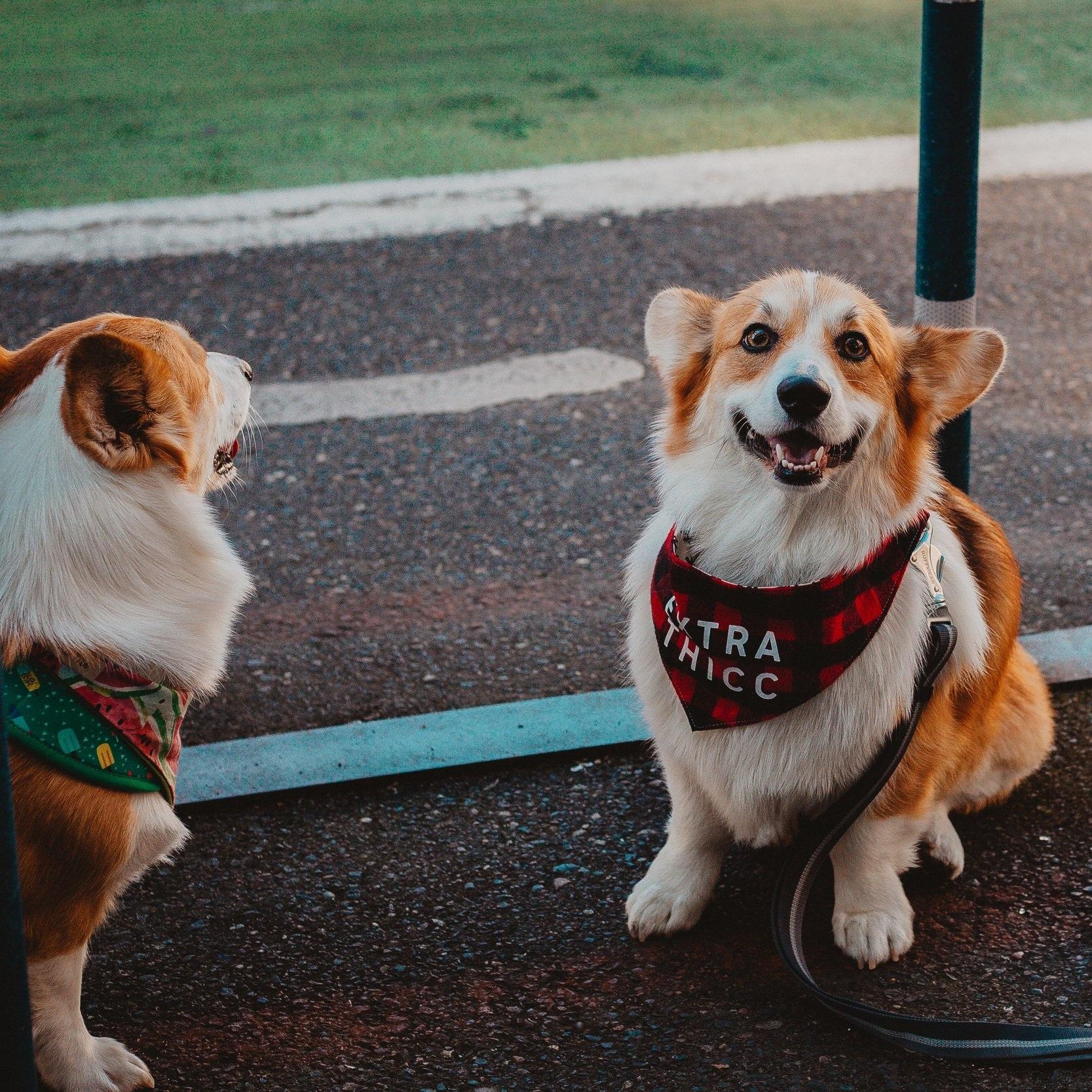 animal-photography-animals-canine-2463238.jpg