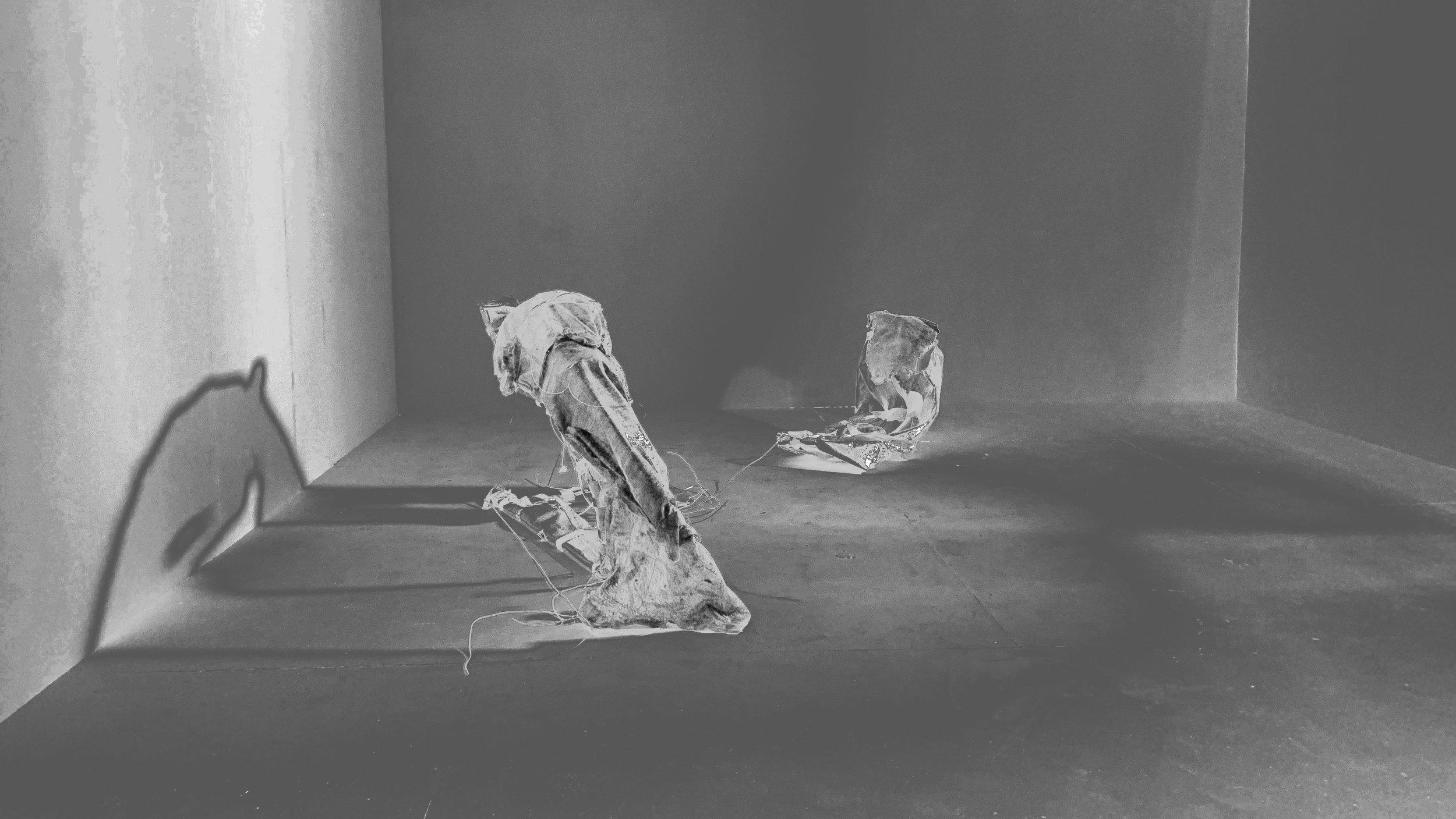 1. portia-The Flea .jpg