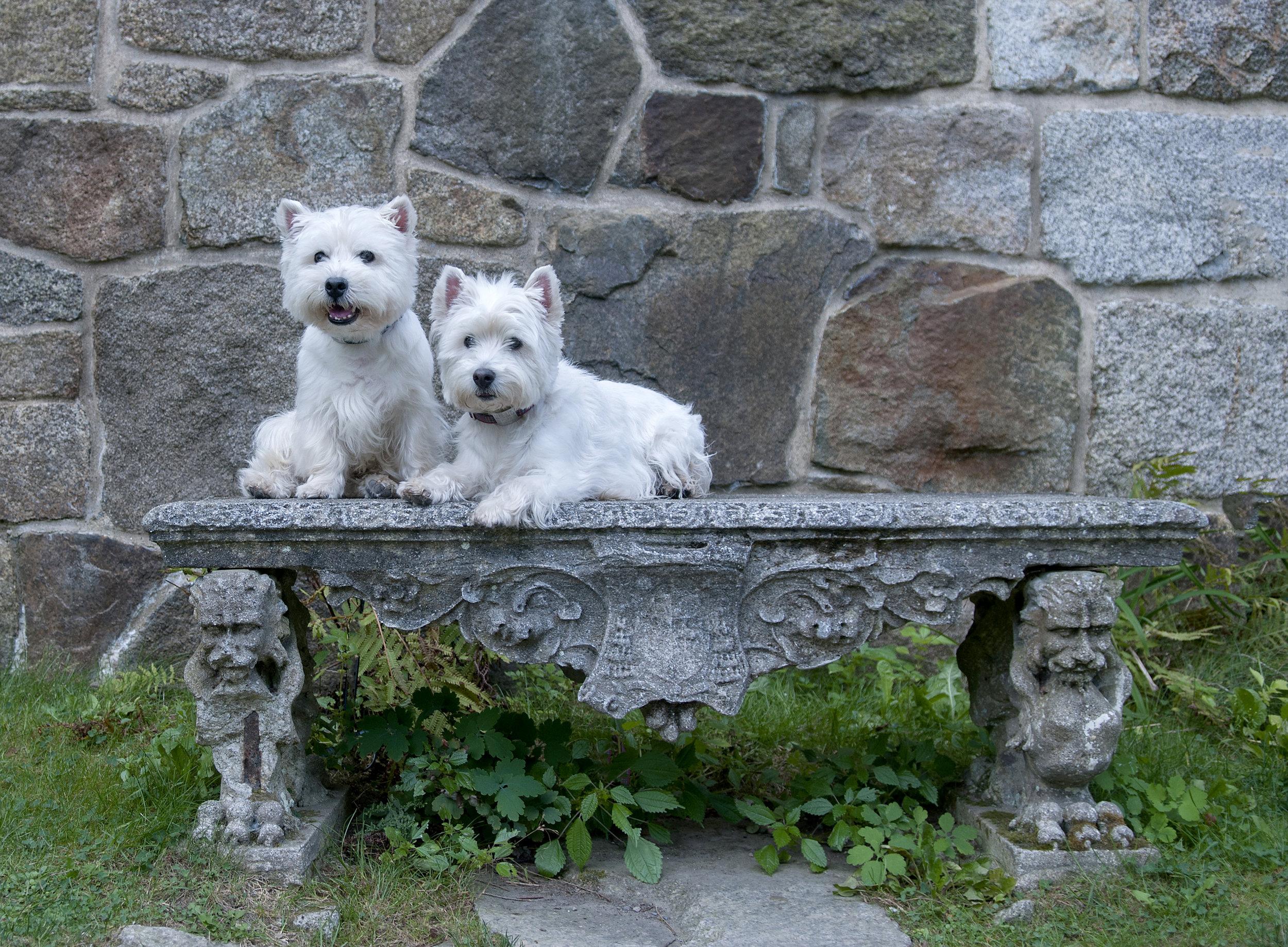 Maise & Dundee