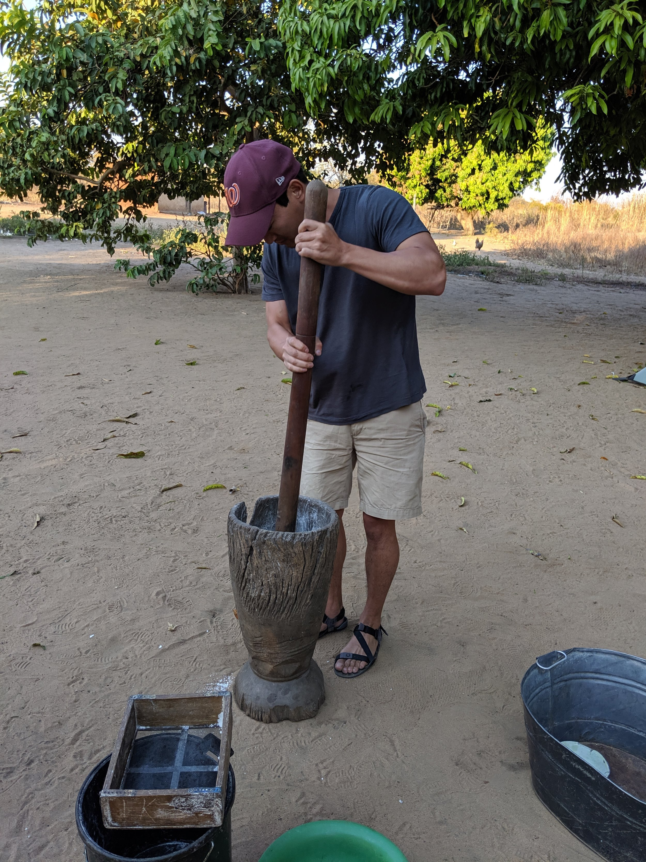 Pounding cassava. It is then sifted. The finer powder is added to nshima and the bigger chunks are re-pounded.