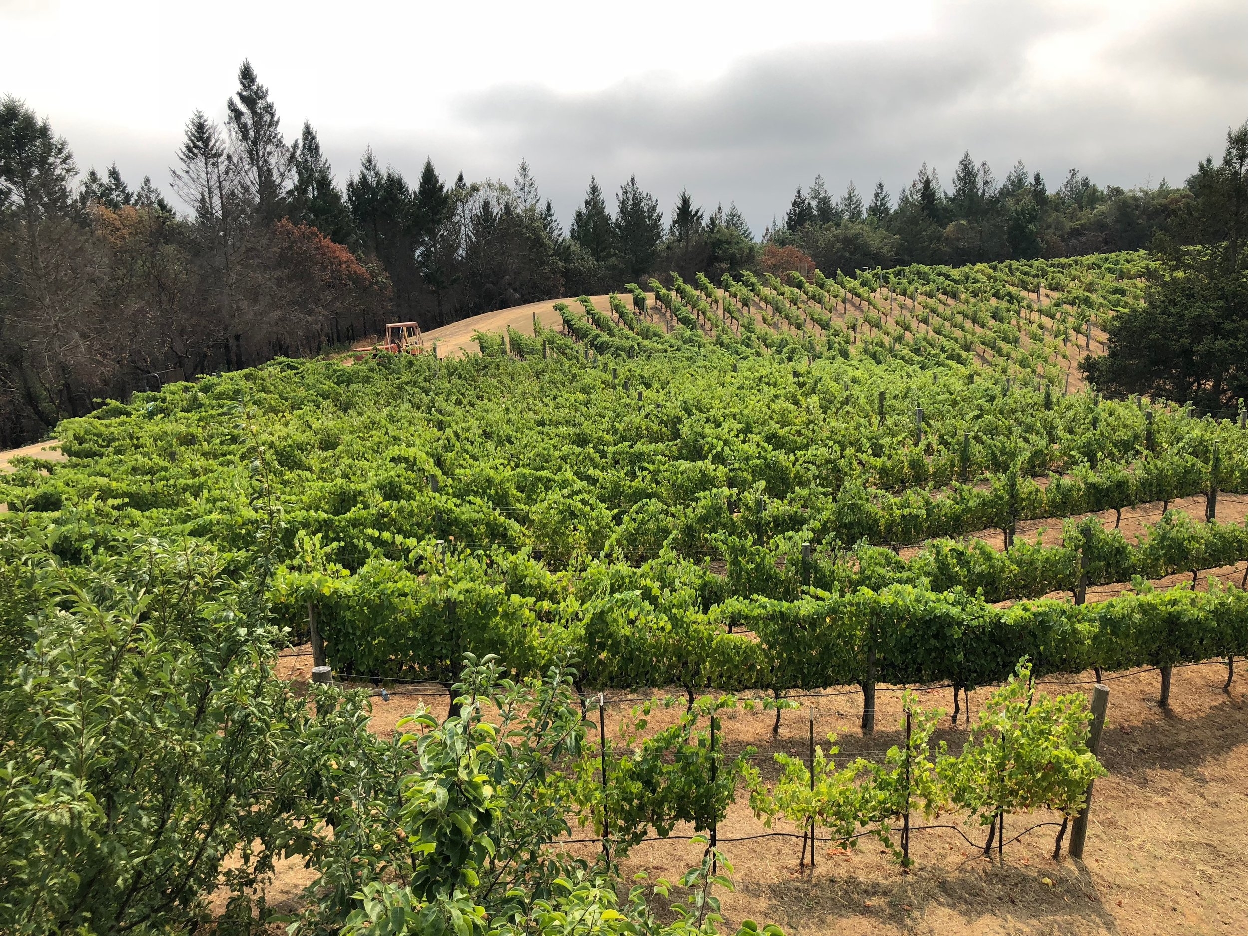 1300 feet elevation and cool afternoon breezes from the San Francisco Bay helped Steve Lagier and Carole Meredith choose Syrah -