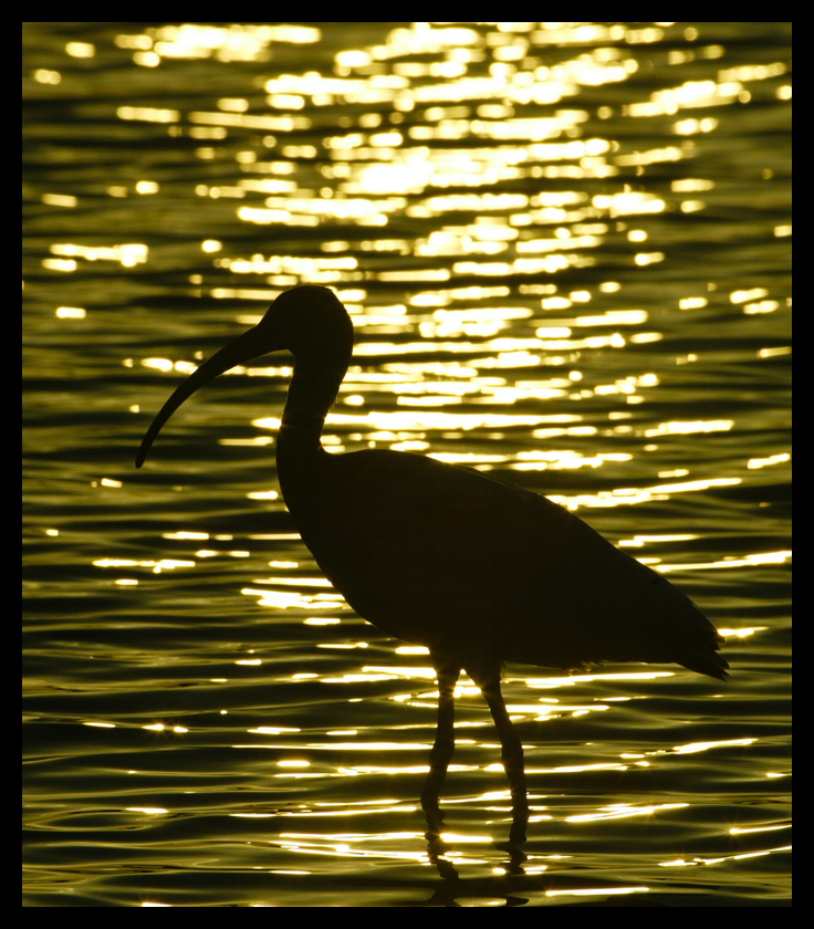 My early bird photography - Florida in 2003 with a 4-mp Canon 1D