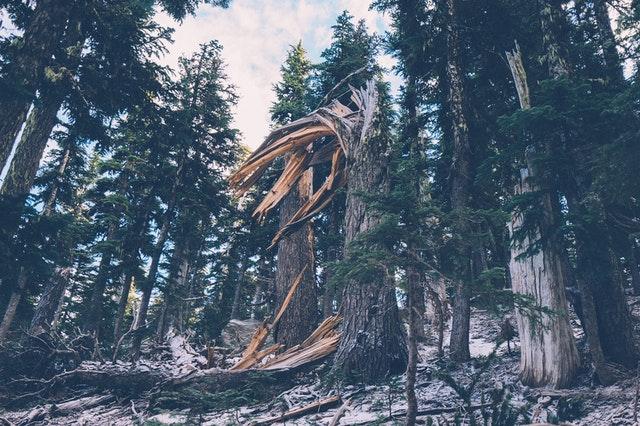 fallen-tree-5224 (1).jpg