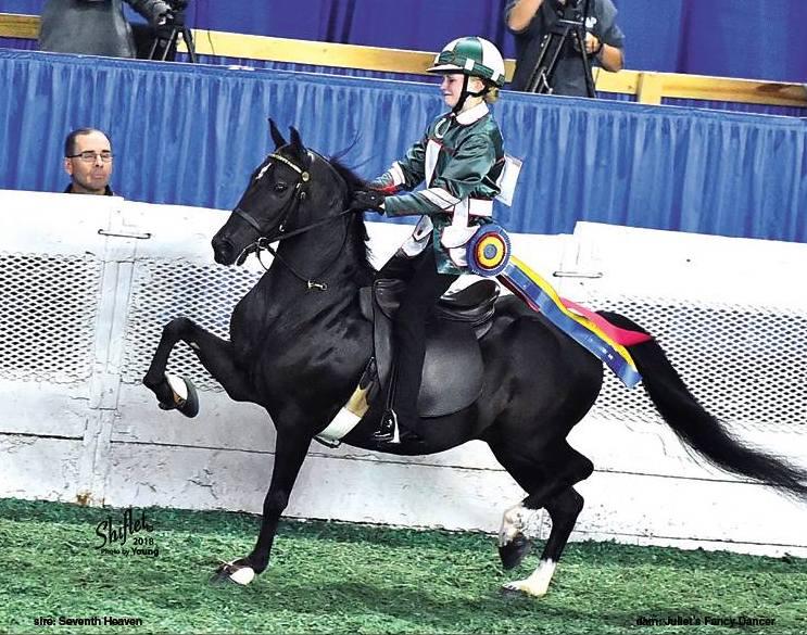 Hopkins Saddle.jpg