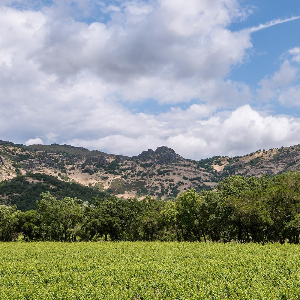 Vineyard-View-1000x1000.jpg