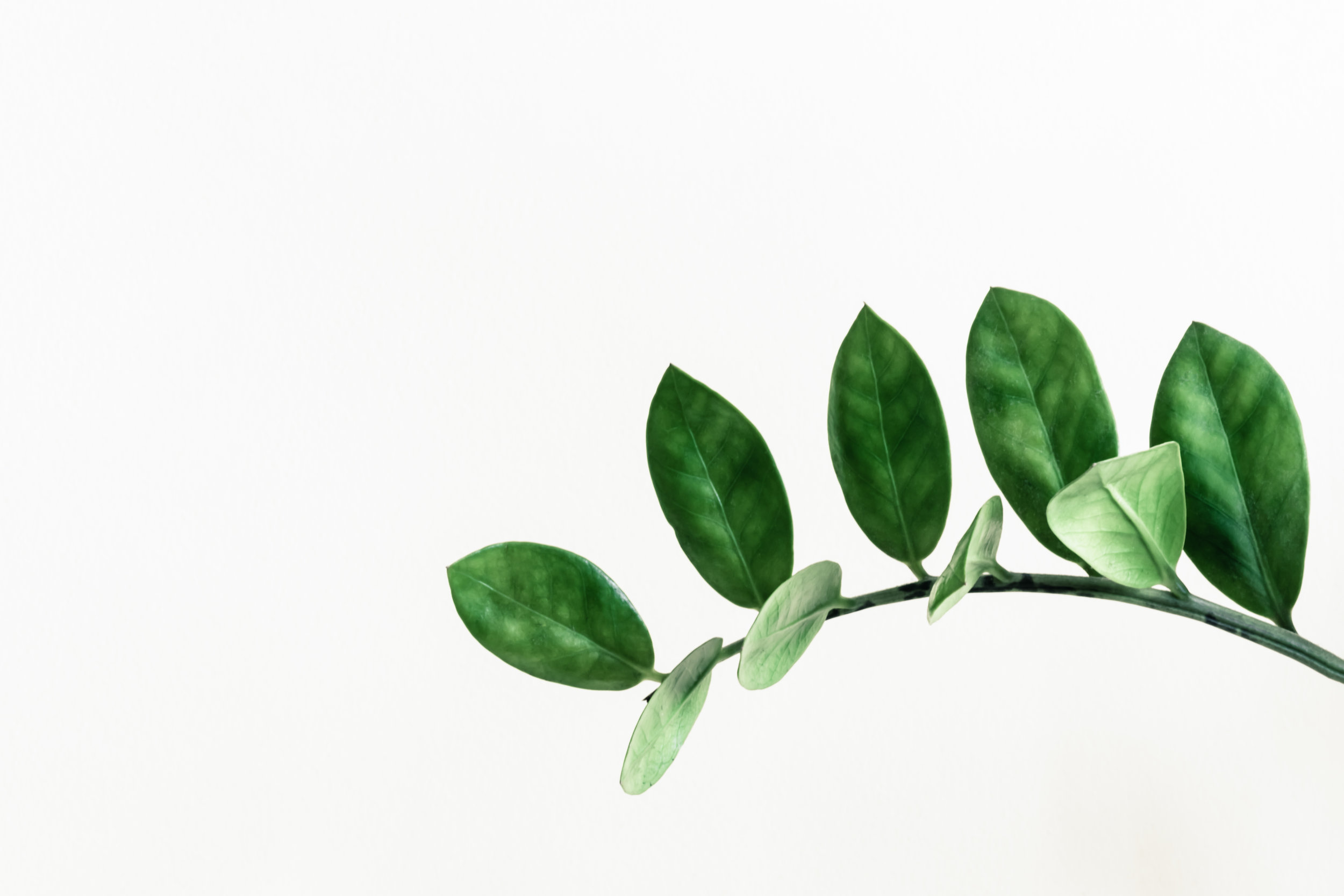 Green - Green is serene and peaceful, and it conveys the idea of growth. This is why green is a popular color for brands related to health, nature, and the environment.