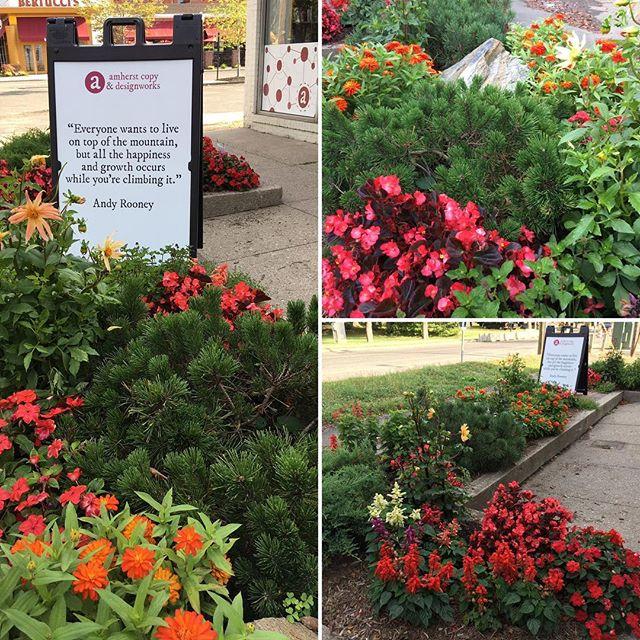 Our #flower #garden looks fantastic!