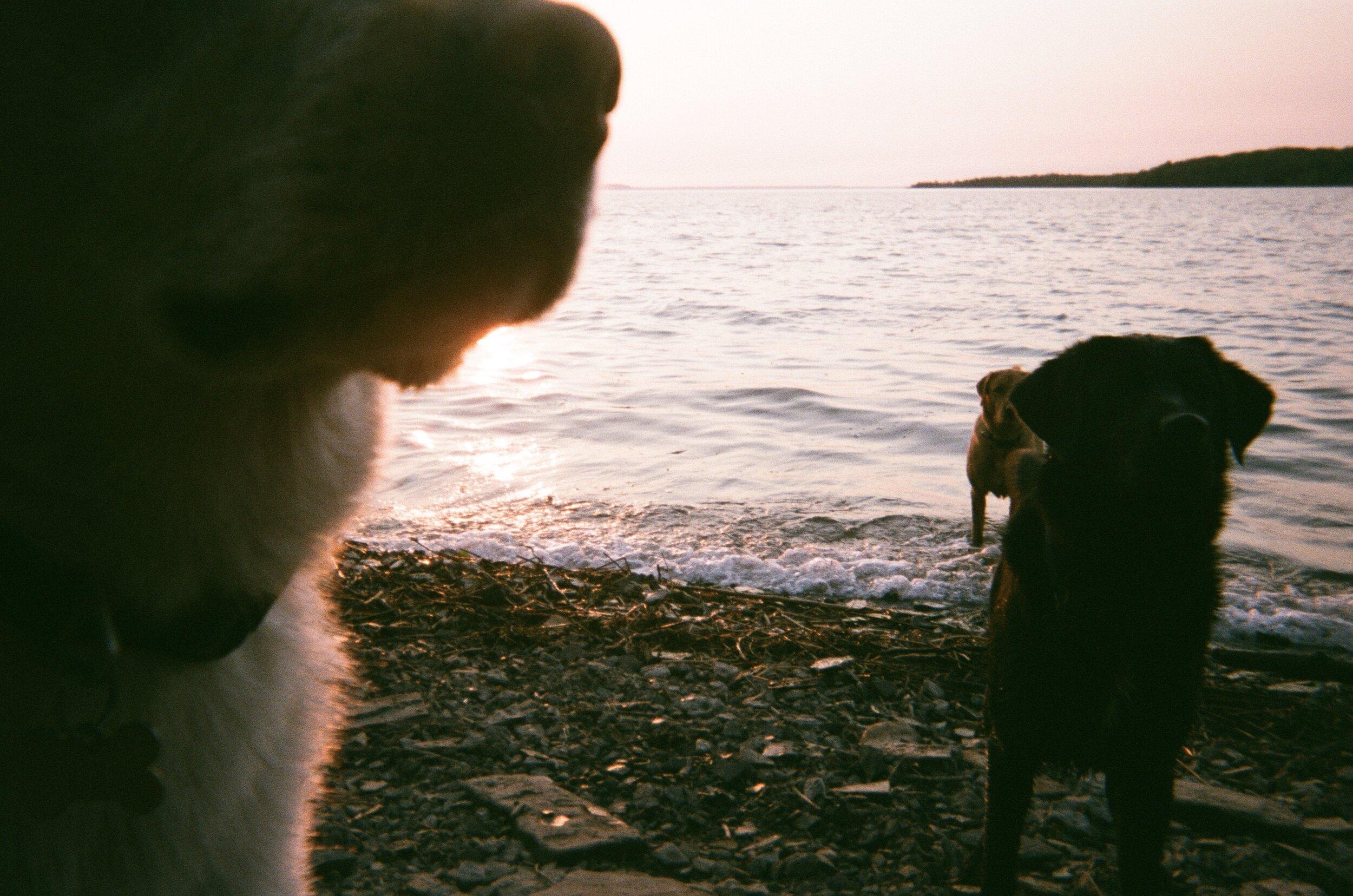 dogs at sunset.jpg