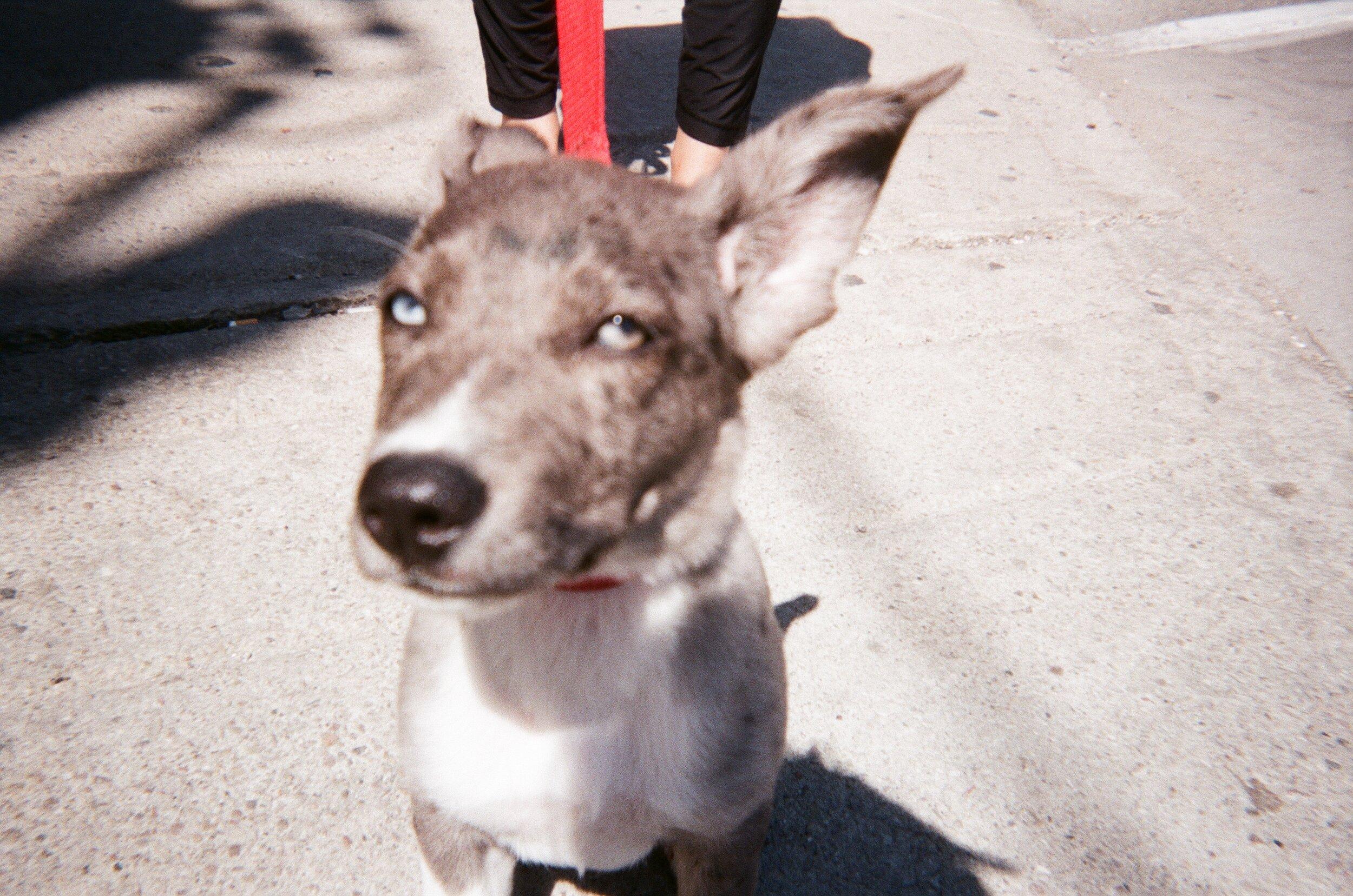 blurry. dogJPG