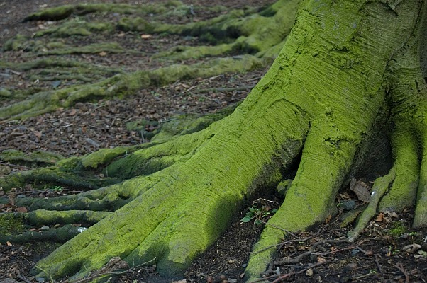 small.tree.roots.Morguefile.jpg