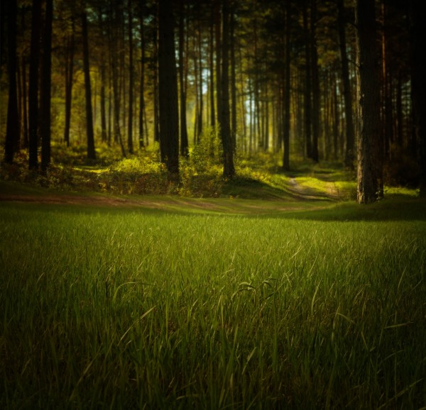 sm.mysterious-forest.LarisaKoshkina.PDP.jpg