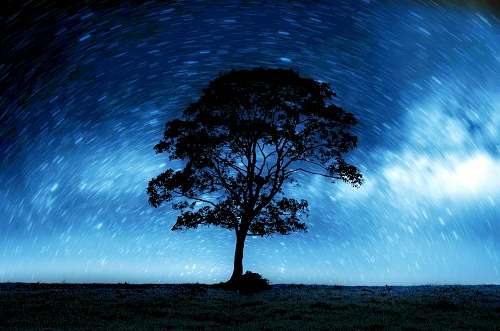 night-sky-with-lonely-tree.sm.blue.GeorgeHodan.PDP.jpg