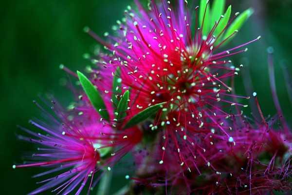 small.hotpink.green.flower.mrgfile_4.jpg