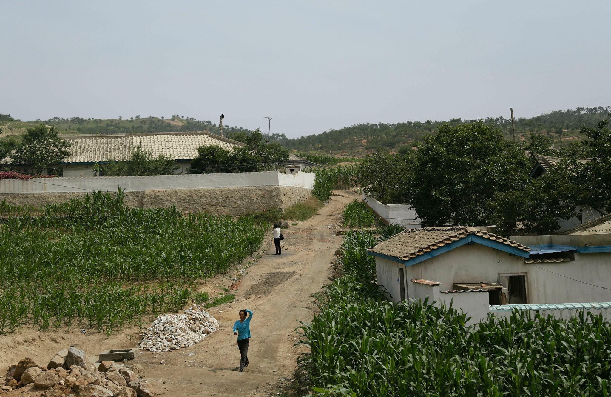 Cornfields in South Hwanghae, North Korea, in 2015. Severe drought and a weak harvest last fall have brought urgent warnings of a food crisis in the North. Credit Wong Maye-E/Associated Press