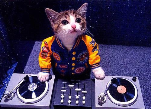 DJ Kitteh.jpg