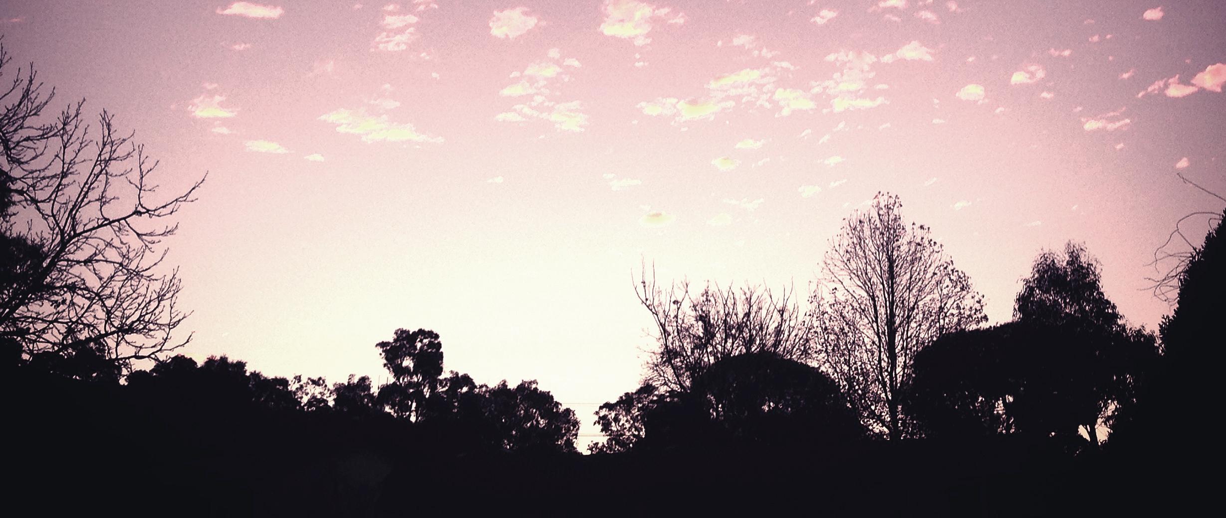 Jem Trees 2.jpg
