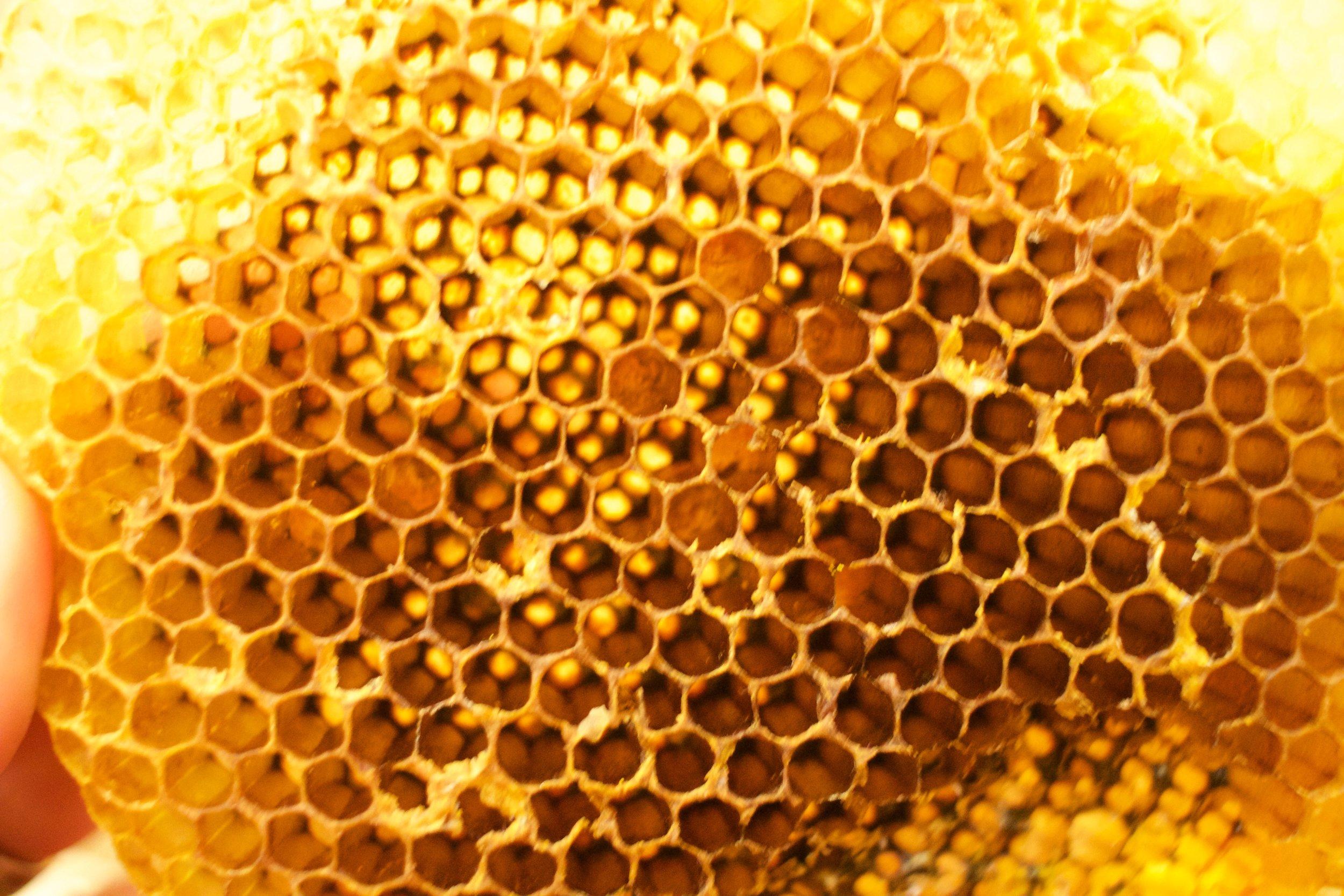 Golden Hive